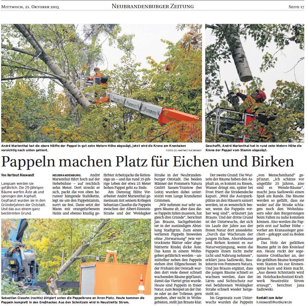 Geschafft! Die Pappeln zwischen der Albert-Einstein-Straße und der Woldegker Straße in der Neubrandenburger Oststadt wurden von uns abgenommen. Warum? Lesen Sie selbst im Artikel nach!